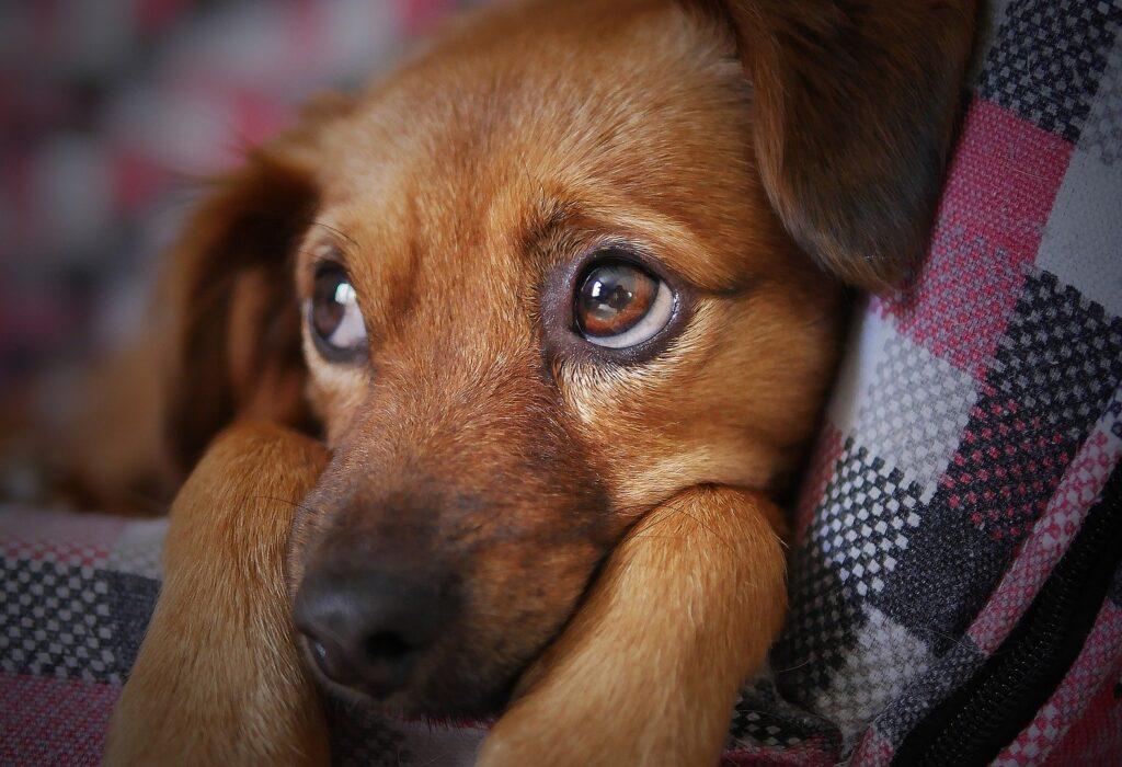 Canil de Limeira terá evento de adoção de animais no sábado (7)