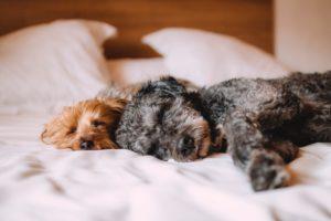 Pets: quarentena influencia comportamento e alimentação do seu melhor amigo