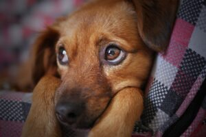 Cinco cuidados especiais para os cães no inverno