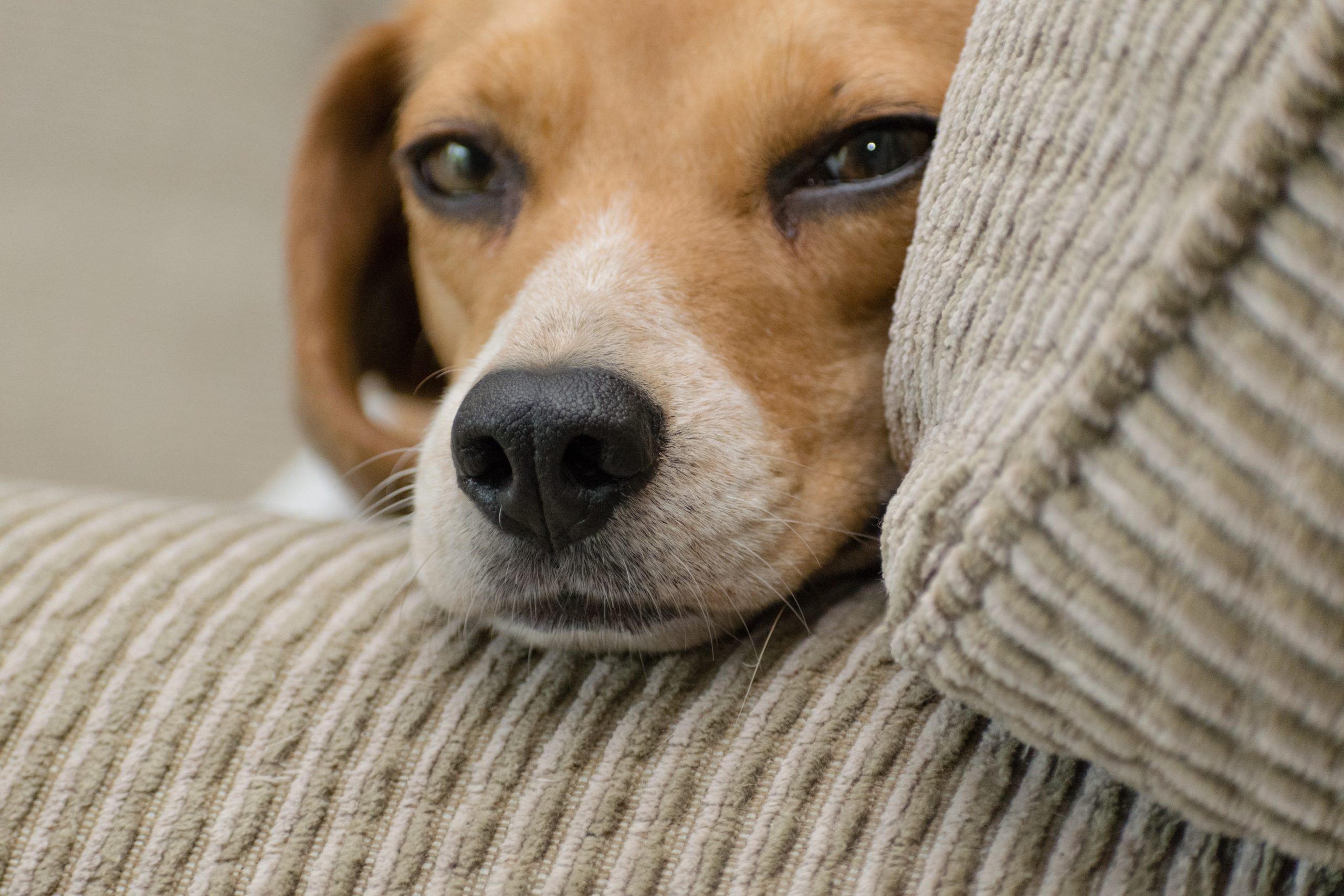 Pets estão ligados diretamente a maior bem-estar para a terceira idade
