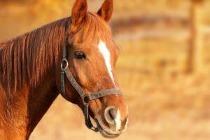 TJ-SP concede habeas corpus inusitado a cavalo