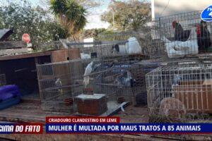 Mulher é multada por maus tratos a 85 animais em Leme