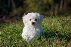 Os cuidados mais importantes com os cães na primavera