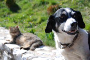 Castrações de cães e gatos são retomadas em Limeira